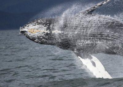 Northern Coastal British Columbia Salmon & Halibut Charters