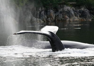 British Columbia Coastal Waters Scenic Eco Tour