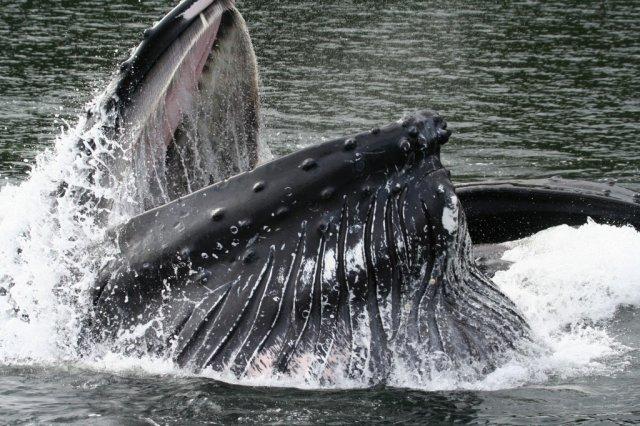 Northern British Columbia Coastal Ocean Scenic Eco Adventure Tours